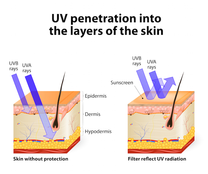 UVA and UVB penetration. Illustration © edesignua and used with permission.